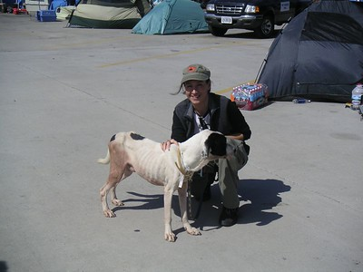 First rescued dog I met when we arrived.  I saw so many that looked like this my first walk through the kennel, I went to my car, called Lenny and cried. I didn't think I could this!