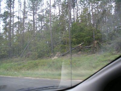 Trees broken like toothpics.