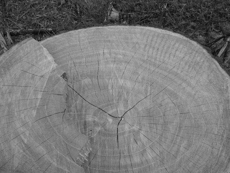 ?the wisdom tree?