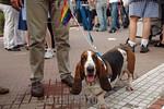 Argentina : XIV Marcha del orgullo gay , el 19 de noviembre 2005 en Plaza de Mayo Buenos Aires perro / Argentina: gay pride in Buenos Aires (meeting gay) , the 19 november 2005 / Argentinien ...