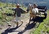 Venezuela : Campesinos Andinos , en el Paramo La Culata, estado Mèrida-Venezuela / Farmer / Bauer mit einem Pferdegespann in der Andenprovinz Merida © Juan Carlos Hernandez/LATINPHOTO.org