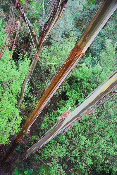 "The Otway Fly has tree top walks in a forest.<br /> <br />  <a href=""http://www.otwayfly.com/home.htm"">http://www.otwayfly.com/home.htm</a>"
