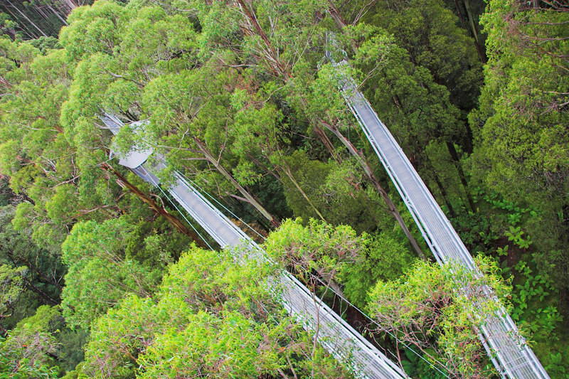 This photograph was taken from the top of the tree top tower, which is 45 metres above the ground. you can see two of the walks converging towards the base of the tower.