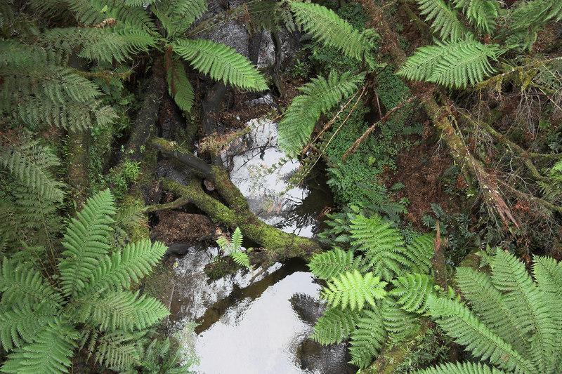 Looking down upon a creek that runs below the tree top walk.