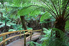 After our journey from Phillip Island, we stayed at Apollo Bay for the evening of 23rd April.<br /> <br /> This is the Maits Rest Rainforest Walk