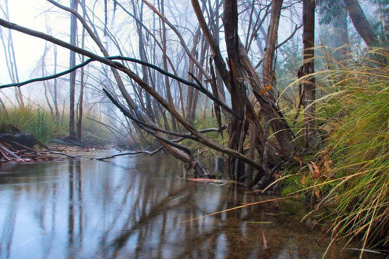 Eurobin Creek, near where it flows into Lake Catani seen from the lakeside walk.
