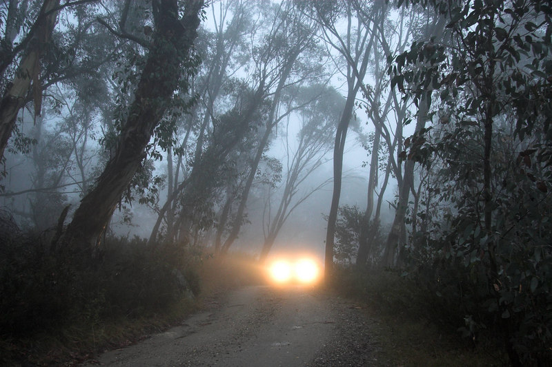 A car looming through the thick mist.