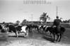 Uruguay : Uruguayos, Rocha . vacas. gaucho. / Uruguayan cowboy. cows. / Kuhherde bei Rocha. (B/W) © Rodrigo Hill/LATINPHOTO.org