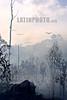 Bolivia : quema de selva tropical . Deforestacion. Cambio climatico. / Burning rain forest. amazon. / Bolivien: Klimaveränderung  durch Brandrodung im Amazonas. Abholzung. Entwaldung. Regenwald. © Patricio crooker/LATINPHOTO.org