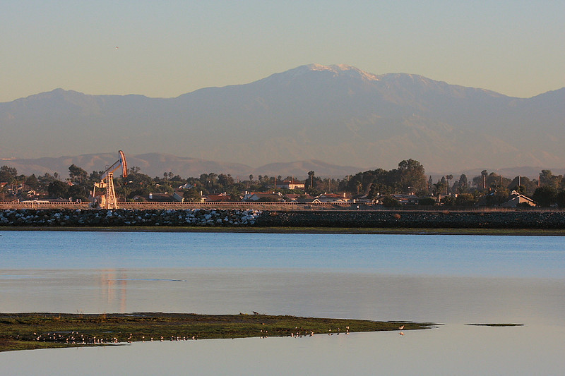 This is the view from the main path at Bolsa Chica looking northeast, with the snow-dusted Mt Baldy in the background. As you can see, suburbia and industry border the preserve -- in the case of the derrick, oil is still pumped-out there.