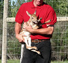 fawn at wild animal farm in dawson creek0001