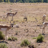 Antelope - On way back to main hwy. from Mormon Road.