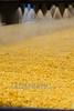 Chile : Procesos en planta productora de alimentos . / Corn packing industrial processes. / Industrielle Produktion von Mais. © Nicolas Nadjar/LATINPHOTO.org