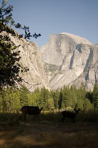 2008-09-11 - Yosemite (15 of 72)