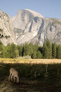 2008-09-11 - Yosemite (4 of 72)