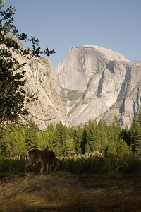 2008-09-11 - Yosemite (13 of 72)