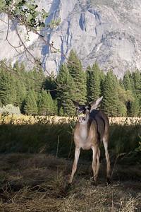 2008-09-11 - Yosemite (52 of 72)