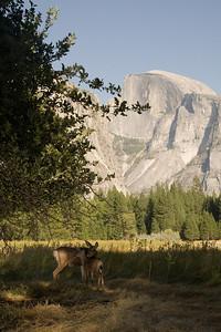 2008-09-11 - Yosemite (12 of 72)