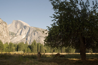 2008-09-11 - Yosemite (8 of 72)