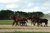 Polo Ponies<br /> photo by Rob Rich © 2008 516-676-3939 robwayne1@aol.com