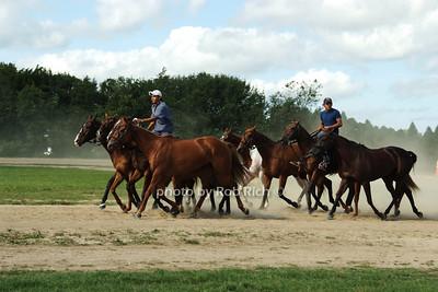 Polo Ponies photo by Rob Rich © 2008 516-676-3939 robwayne1@aol.com
