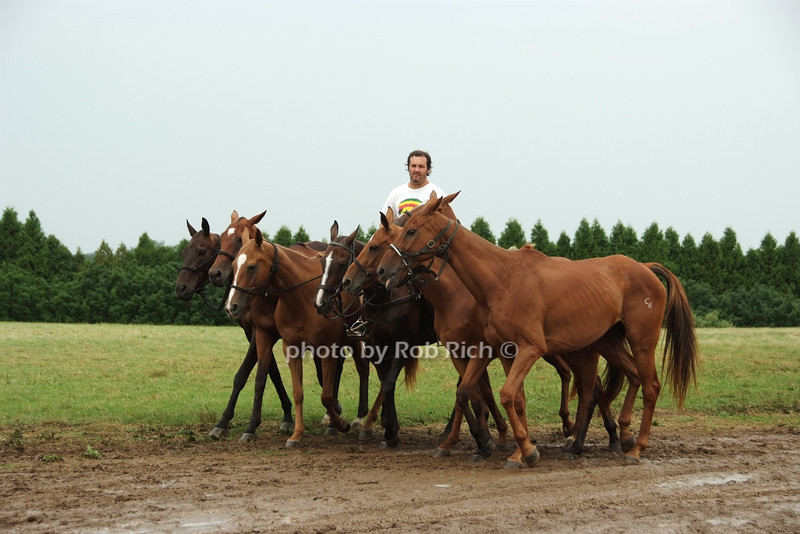polo ponies<br /> photo by Rob Rich © 2008 robwayne1@aol.com 516-676-3939
