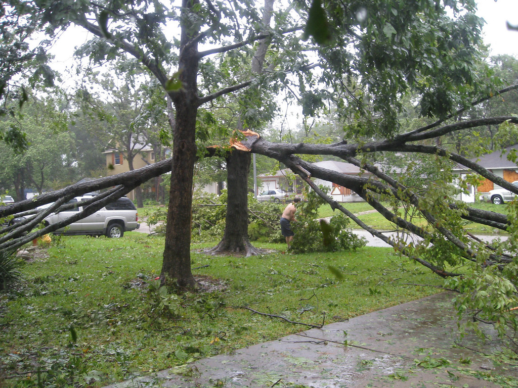 The tree next to my driveway forked and half fell on the neighbor's roof and half across my driveway.