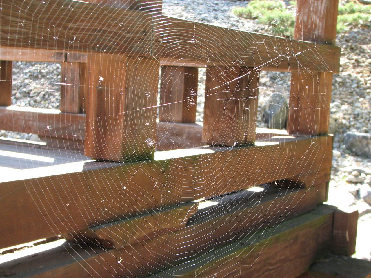 2008 03 09 Sun - Japanese garden 5 - Spider webbing sans spider
