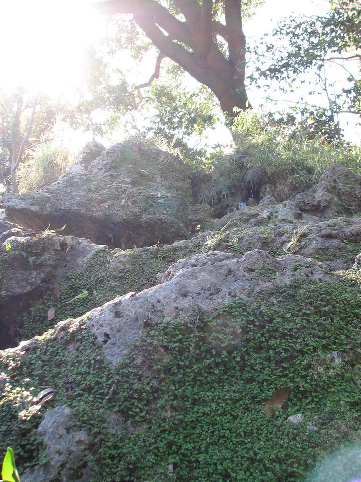 2008 03 09 Sun - Japanese garden 3