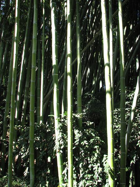 2008 03 09 Sun - Japanese garden - bamboo forest 2
