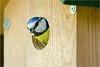 BIB<br /> = Bird in Birdhouse