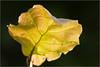 One leaf