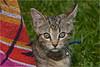 Kitten (2)