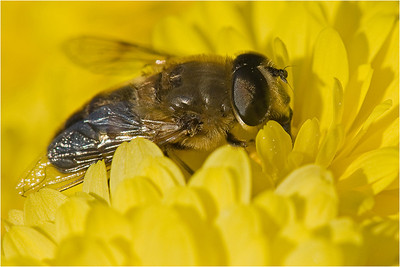 Fly, knee deep in petals
