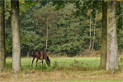 Horse, FBN
