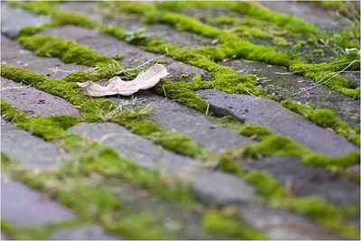Lonesome Fallen Leaf, on green moss