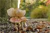 Group Fungus