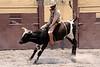 """Mexico - Toluca : El Deporte Nacional por excelencia en Mexico, es la """"Charreria"""" donde humanos y equinos luchan contra ganado ovino para someterlo o domarlo (simulando las antiguas labores del campo como en antano) por lo tanto, esta competencia reune a varias asociaciones donde los integrantes hacen gala de sus conocimientos para realizar vistosas suertes ya sea a pie o a caballo con la reata lazando y derribando a las vaquillas, toros y potros dentro de un lienzo tipo vaquero . / The charreada is a style of rodeo developed by people in Mexico interested in keeping the traditions of the charro (charreria) alive. / Mexiko: Charreria heisst der mexikanische Nationalsport und ist mit dem Rodeo vergleichbar. Stier. © Luis Enrique Hernandez V./LATINPHOTO.org"""