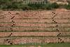 Peru : Vista de la zona arqueologica de Moray, utilizada en la antiguedad y en la actualidad como laboratorio agricola . Andeneria en Moray. Febrero 23, 2008. / The Incan agricultural terraces at Moray. / Die Doline Qechuyoq. Das Inka-Agrarversuchsfeld Moray ist eine Anlage, bestehend aus mehreren Terrassen in verschiedenen Höhen. Sie wurde in drei grösseren natürlichen Dolinen verschiedener Tiefe errichtet. © Carolina Lopez Llano/LATINPHOTO.org