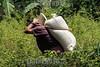 Mexico : Siembra de café en Cuetzalan , Puebla / Coffee plating in Cuetzalan , Puebla / Mexiko : Kaffeeplantage in Cuetzalan - Ein Arbeiter auf einer Kaffeeplantage trägt ein Sack voller frisch geernteter Kaffeebohnen - Kaffeeernte - Plantagenarbeiter © Prometeo Lucero/LATINPHOTO.org
