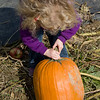 Beverly decides on a pumpkin
