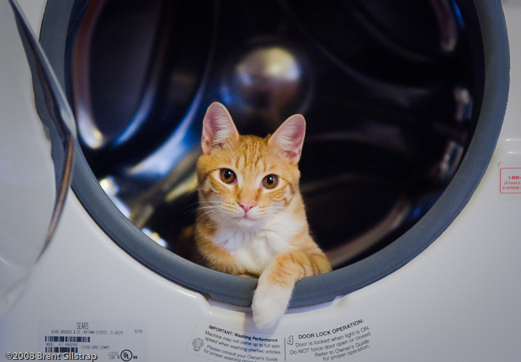 """Lenny in the Washer"" Mariposa, CA  Section: Professional Enlargements Class: Humor Place:  <b><font color=""blue""><u>1st</u></font></b>"