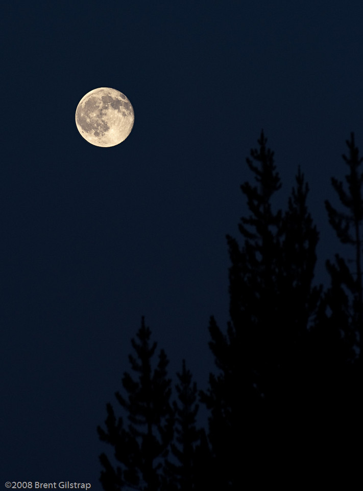 """Moon and Trees"" Yosemite National Park, CA  Section: Professional Enlargements Class: Other Place: <b><font color=""white""><u>3rd</u></font></b>"