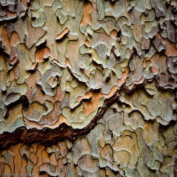 "Abstract: ""Ponderosa Bark"" Mariposa Grove, Yosemite National Park, CA   Section: Professional Enlargements Class: Creative Manipulation/Abstract/Surreal Place:  <b><font color=""blue""><u>1st</u></font></b>"