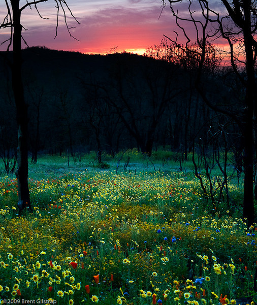 """""""Sunset and Wildflowers"""" Mariposa, CA  Section: Professional Enlargements Class: Natural Landscapes Place: <b><font color=""""white""""><u>3rd</u></font></b>"""