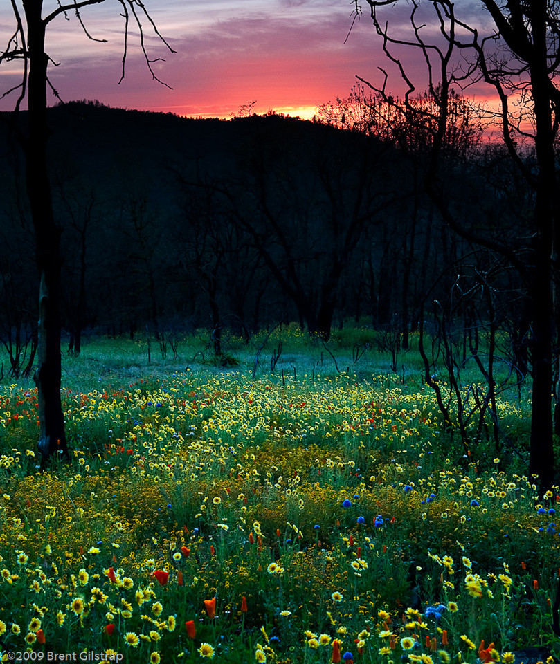 """Sunset and Wildflowers"" Mariposa, CA  Section: Professional Enlargements Class: Natural Landscapes Place: <b><font color=""white""><u>3rd</u></font></b>"
