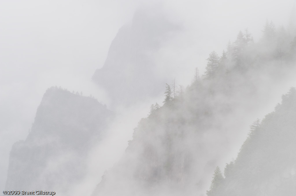 """Fog and Trees"" Yosemite National Park, CA  Section: Professional Enlargements Class: Natural Landscapes Place: <b><font color=""red""><u>2nd</u></font></b>"