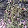 2009-11-21-014 Ozark Plateau NWR Field Trip