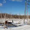 Winter Swampland --<br /> High Point State Park