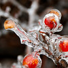 Ice Berries
